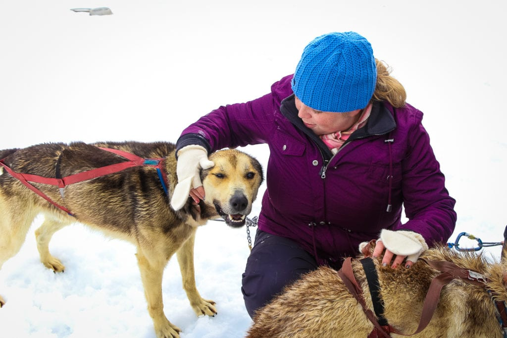 Getting to know the dogs on a dog sledding adventure. Photo by Britni Vigil