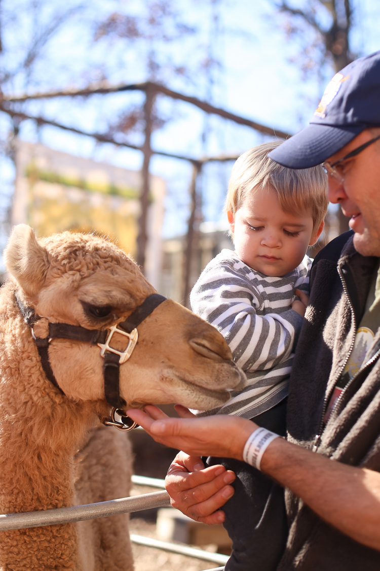 The hands on element of the Promised Land Zoo makes it one of the best things to do in Branson with kids