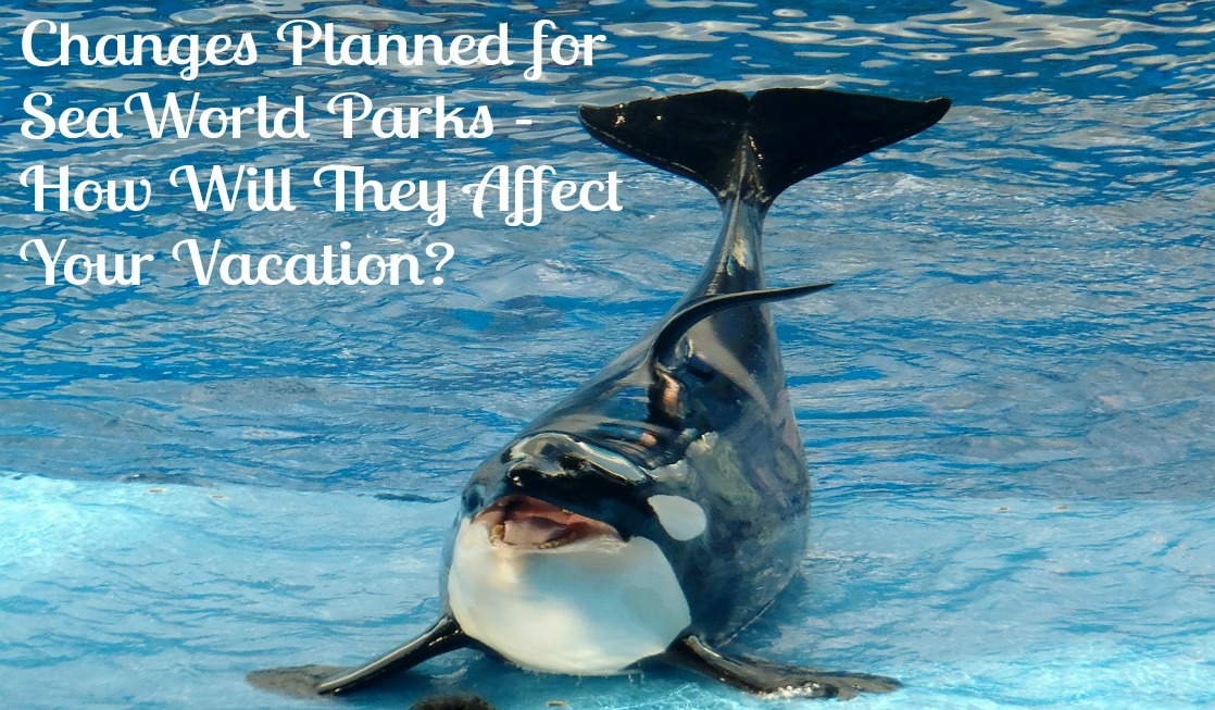 Changes Coming to SeaWorld as Society Changes