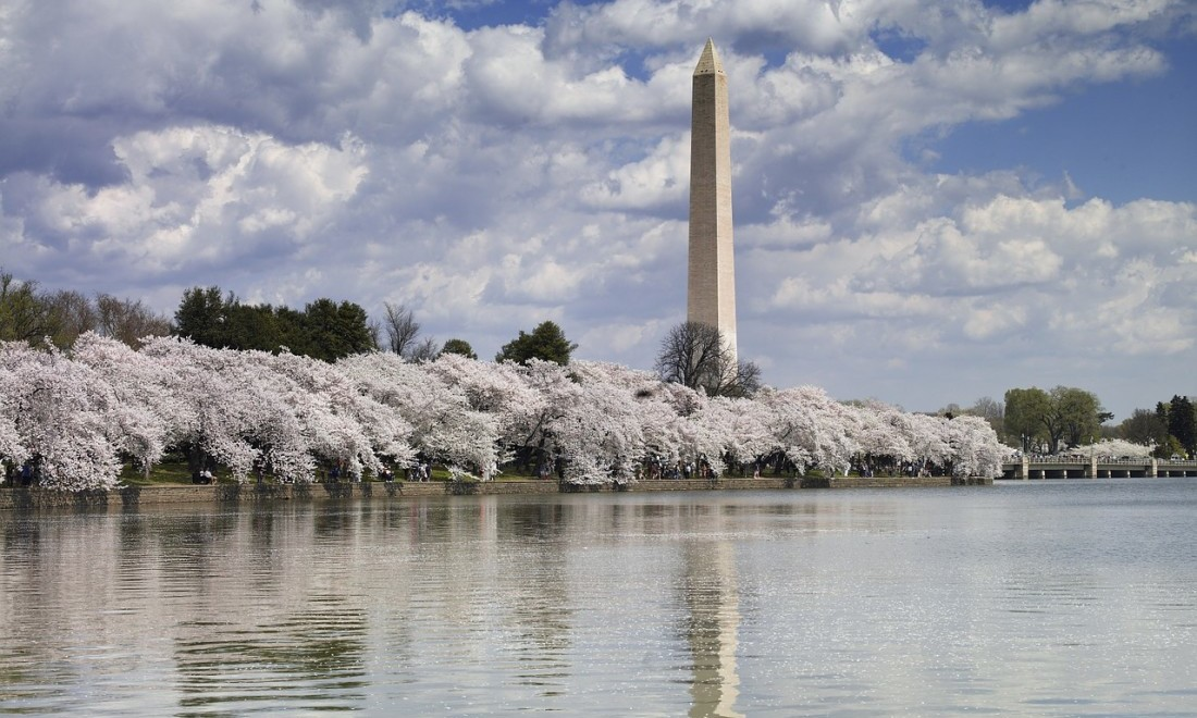 2018 Washington DC Cherry Blossoms: 4 Viewing Tips