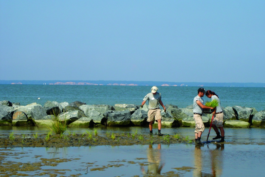 Eco tourism volunteers clean a beach. Photo courtesy the National Aquarium