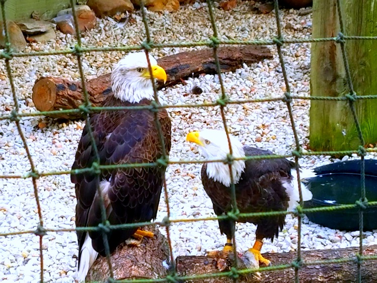 Dollywood Eagles Outdoor Education