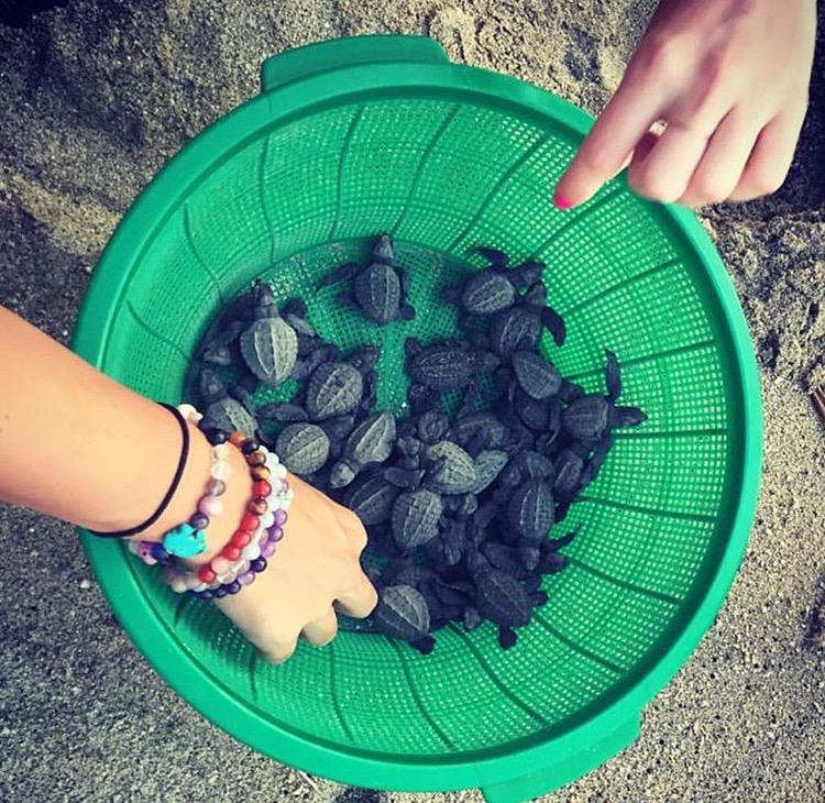 "Demonstration of the ""power of play"" at a Rock Your Bliss retreat. Releasing three-day old turtles to the ocean. Photo credit: Mary Beth LaRue"