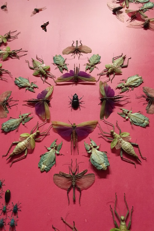 The bugs are just one of the incredible photo-worthy exhibits at the Renwick Gallery in Washington D.C.
