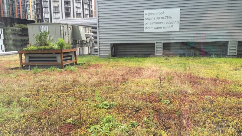 have you stayed at a hotel with a green roof?