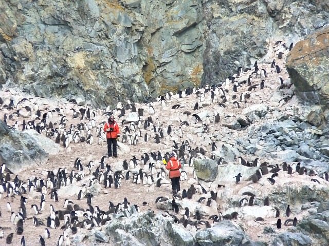 Counting penguins on an Antarctic trip with Lindblad and National Georgraphic. Photo credit Sherry Wernicke, Luxe Traveling Mom.