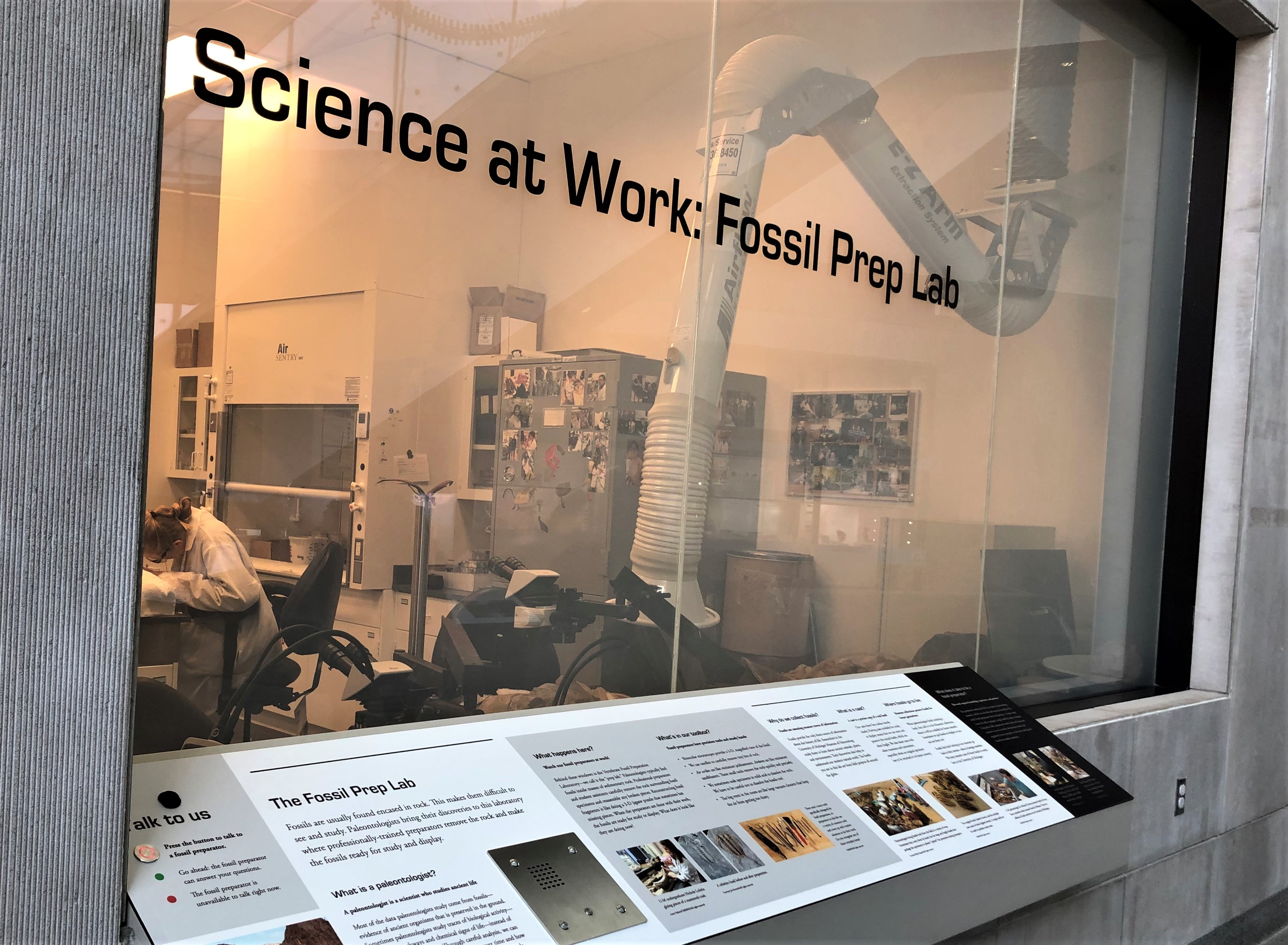 Watch Science at Work in the Fossil Prep Lab at the University of Michigan Museum of Natural History, one of many free things to do in Ann Arbor MI.