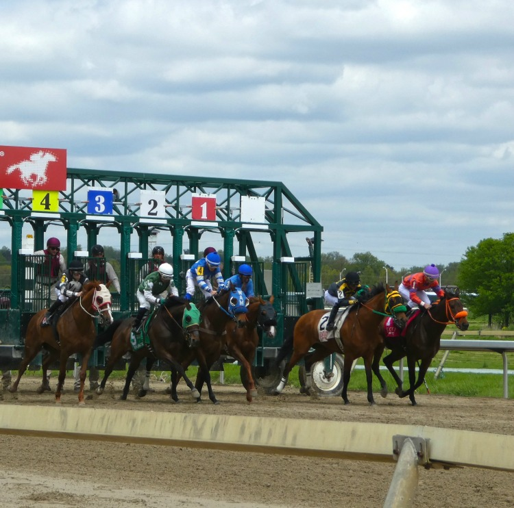 You can watch horses race from up close in Philadelphia
