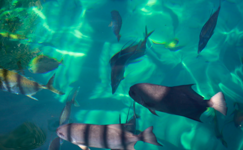 Tropical fish in the Grand Reef at the all inclusive Discovery Cove Orlando