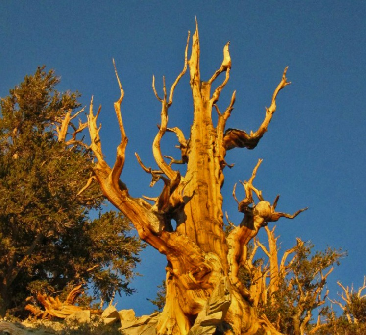 Ancient Bristlecone Pine Forest. Travel experiences can be much more than just seeing new places.