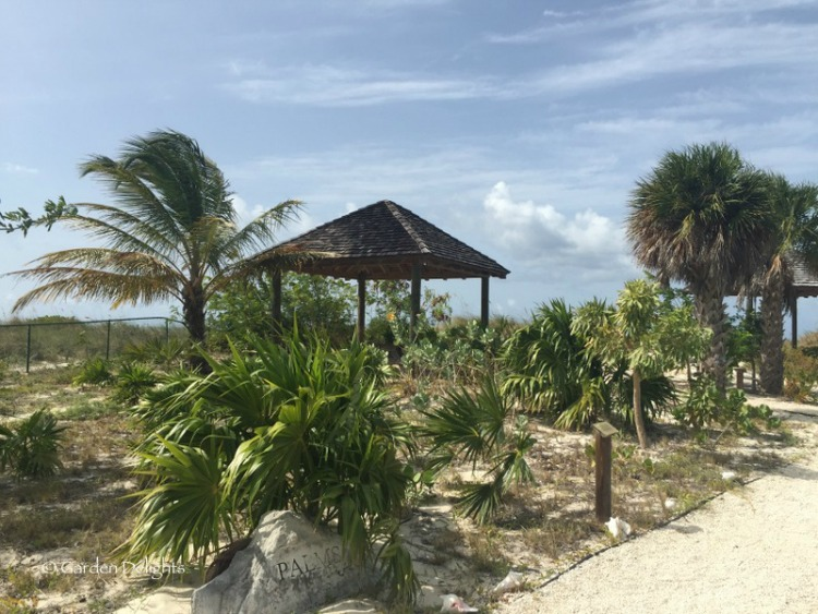 If you're a plant nerd, Bight Beach's botanical garden is a perfect destination in Turks and Caicos.
