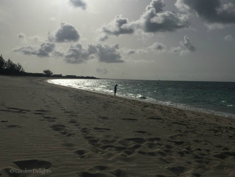 Bight Beach offers the ideal secluded snorkeling destination in Turks and Caicos.
