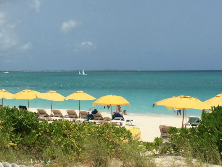 Grace Bay Beach's beautiful, clear waters make it a popular snorkeling destination in Turks and Caicos.