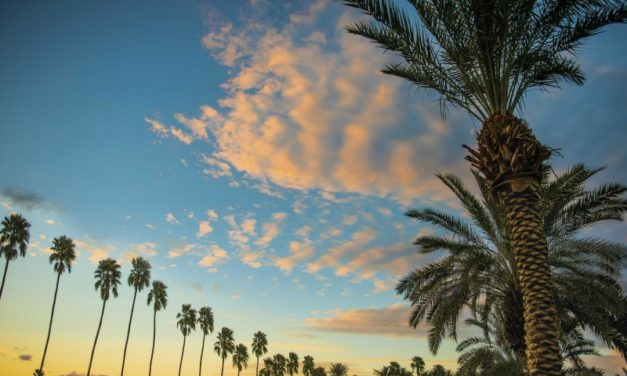 8 Things to Know about Visiting Palm Springs with Kids