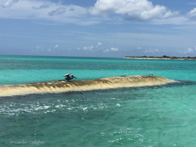 "There's a reason this beach in Turks and Caicos is called ""Pelican Beach."" The mascot welcomes you to the secluded snorkeling cove."