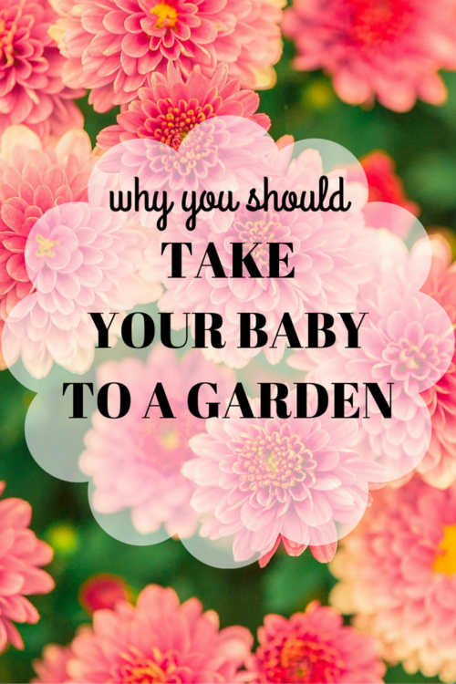 Why you should take a baby to a garden.