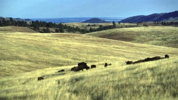 Wind Cave for kids, bison, South Dakota for kids,