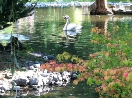 Swans, bald eagles, bears and giraffes all make their home at the Cape May Zoo - and visiting them is free! Photo by Mary Lebeau, EastCoast TMOM
