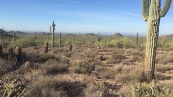 You won't run out of free fun things to do in Arizona