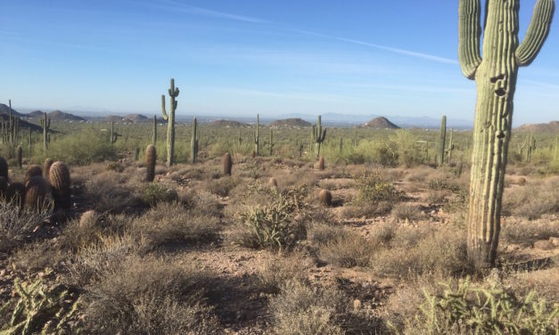 Best Fun, Free Things to Do in Scottsdale and Phoenix