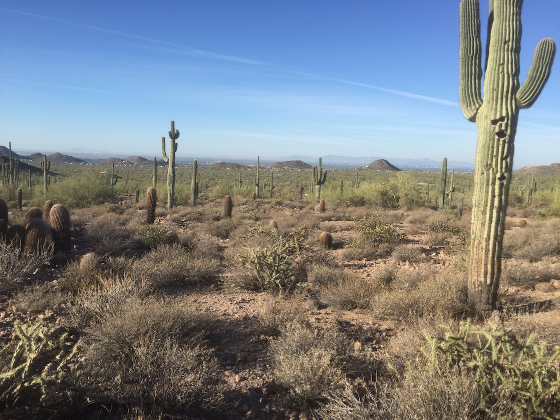 You won't run out of free fun things to do in Scottsdale