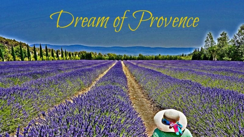 Lavender fields in Provence - how to plan a trip. I found my lavender fields!