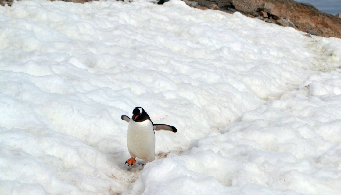 Is Antarctica on Your Bucket List?  Here's What You Should Know Before You Go
