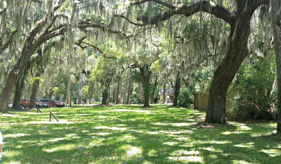 The beauty of nature is abundant on Jekyll Island.
