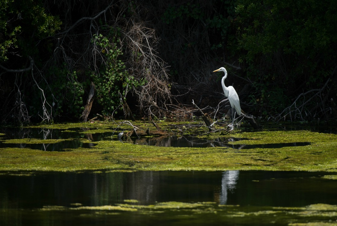 Jekyll Island offers plenty of bird watching and wildlife spotting opportunities.