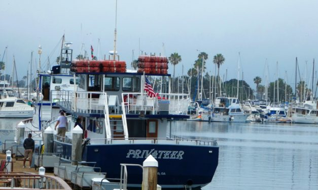 San Diego Whale Watching Offers Year-round Tours in California