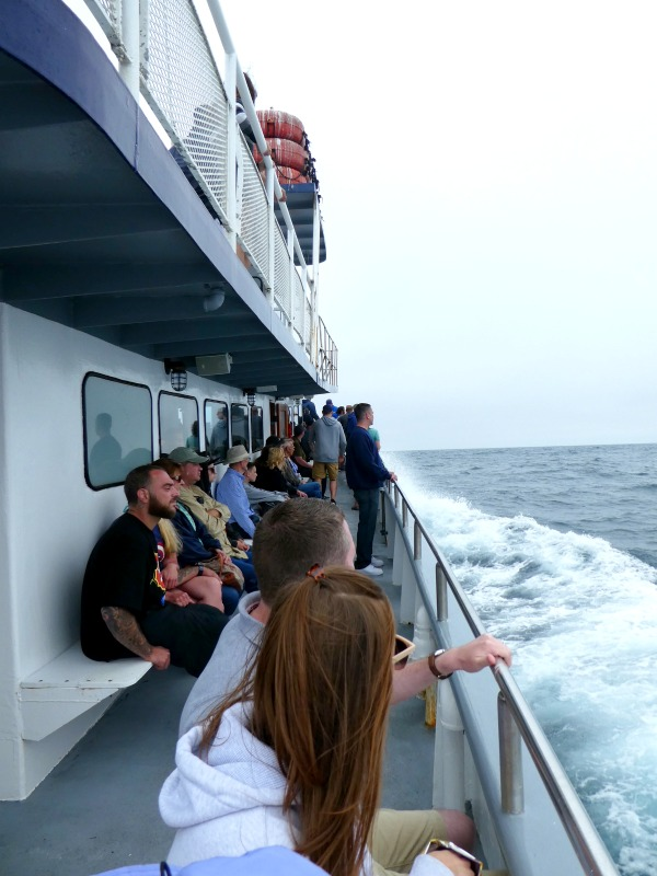 Hoping to whale watch in California, but not visiting during the typical season? San Diego Whale Watching has you covered, and offers year-round tours.