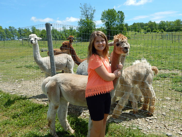Petting alpacas at Heavenly Sunset Farm, Finger Lakes, NY