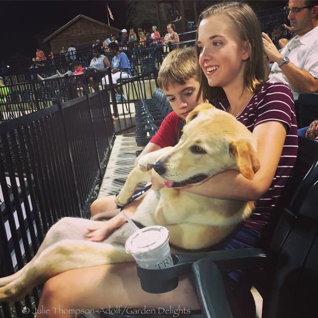 Dogs and puppies enjoy Saturday Night Lights as much as the humans.