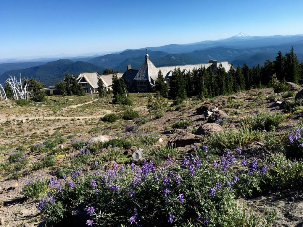 View of Timberline Lodge from PCT