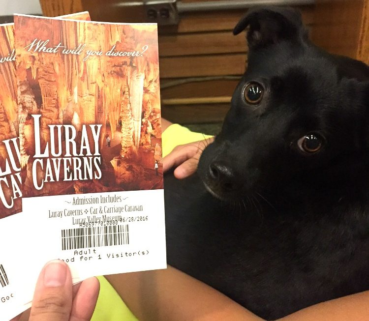 Don't worry about bringing a dog to Luray Caverns - it's pet-friendly!
