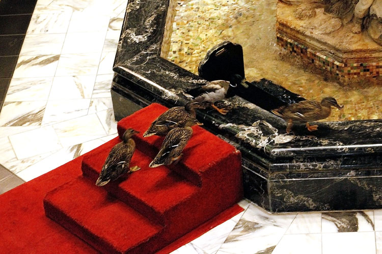 Kids will love the March of the Peabody Ducks that takes place twice every day at the Peabody Hotel.