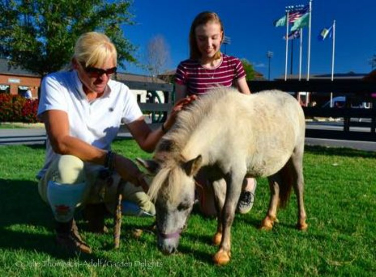 Miniature horses offer a perfect chance for kids to learn about horses.