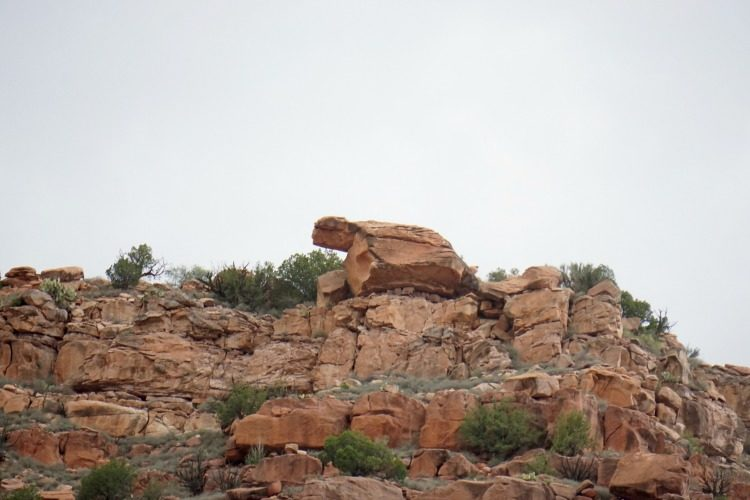 Rock formations in different shapes, like the turtle seen in this picture, are one of the reasons this is a family friendly train in Arizona. Photo by Multidimensional TravelingMom, Kristi Mehes.