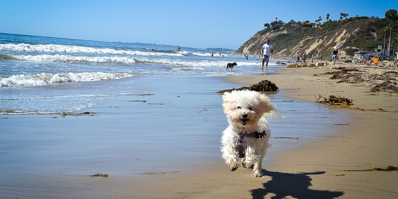 Bring the pets! Pet friendly travel continues to grow