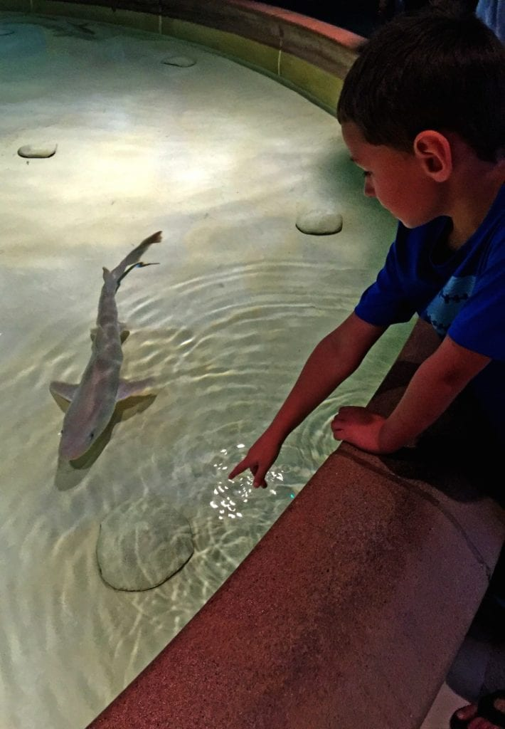Things to do in Indianapolis: Touch a shark at the Indianapolis Zoo.