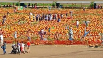 Tanaka Farms Pumpkin Patches in Orange County California