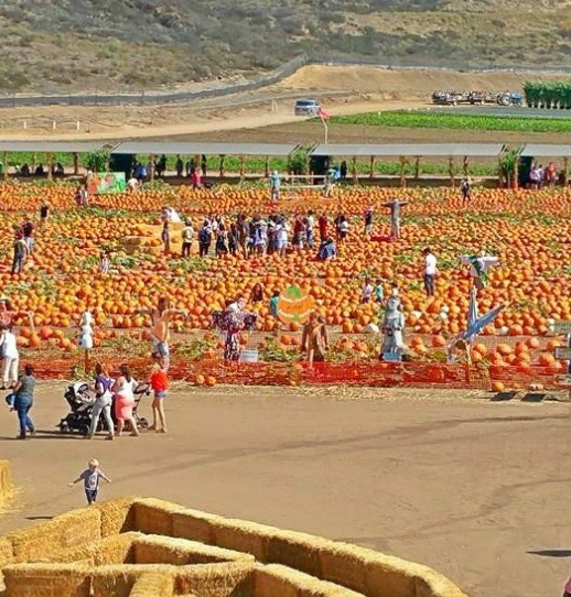 Where to Find Family Friendly Pumpkin Patches in Orange County California