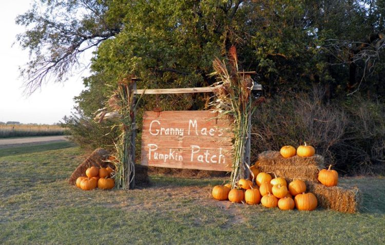 Granny Mae's Pumpkin Patch, Dorrance, Kansas