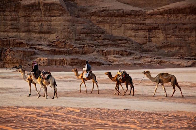 When Taking The Family To Jordan, you'll see camels in Jordan are features of everyday life.