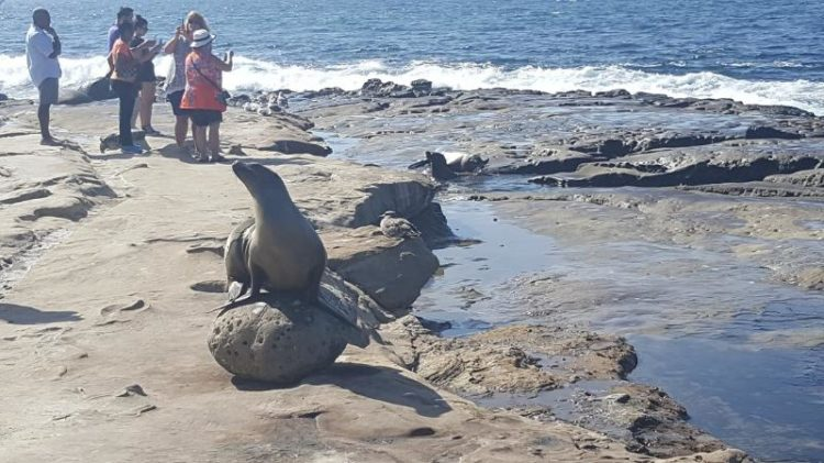 See the sea lions of La Jolla beach, one of the best beaches in Southern California.