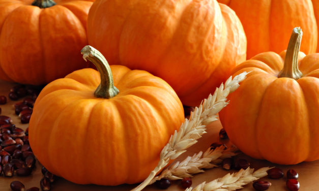 7 of the Best Pumpkin Patches in Kansas