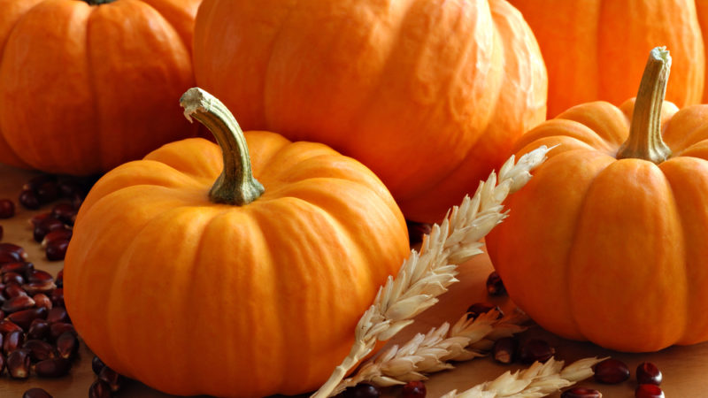 10 great pumpkin patches in kansas this fall.