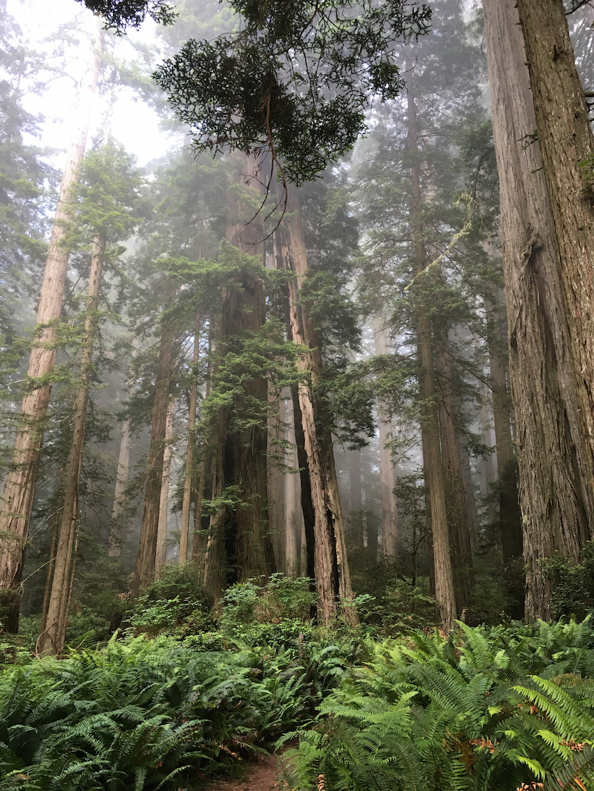 Redwoods National Park with kids, Hiking in the redwoods with kids, Star War locations in California,