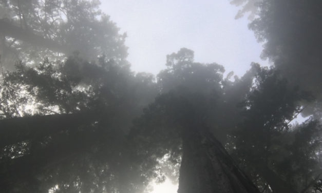 Redwood National and State Parks: Discover the Land of Ewoks
