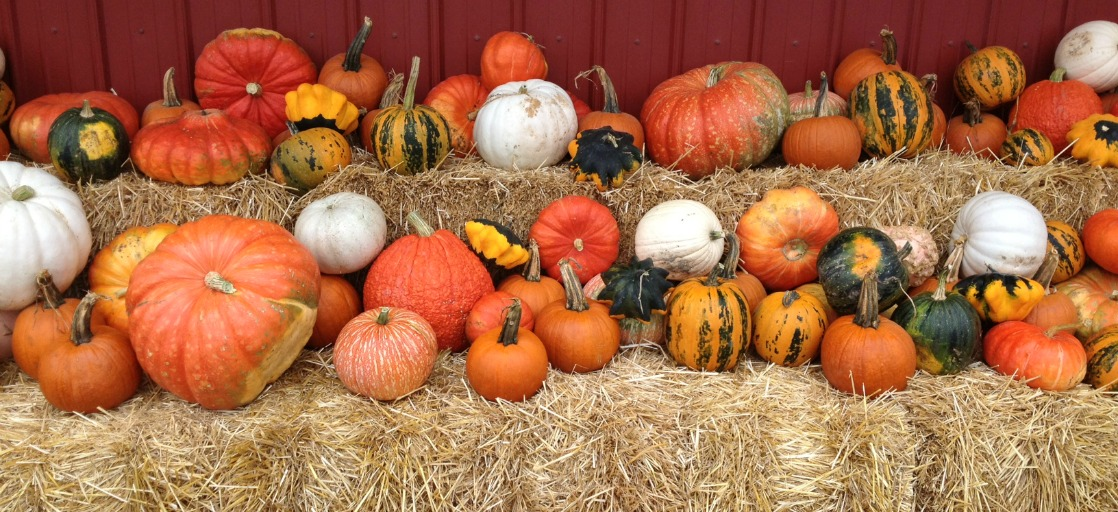 Top 6 Fall Festivals for Families